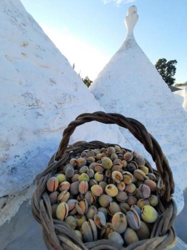 Ugenti Francesca (Genitore) Il nostro tema è il tramandare delle tradizioni contadine cioè la raccolta delle olive e delle mandorle.. una raccolta che si tramanda dai miei nonni e ora a Flavio.. e poi il nostro posto del cuore